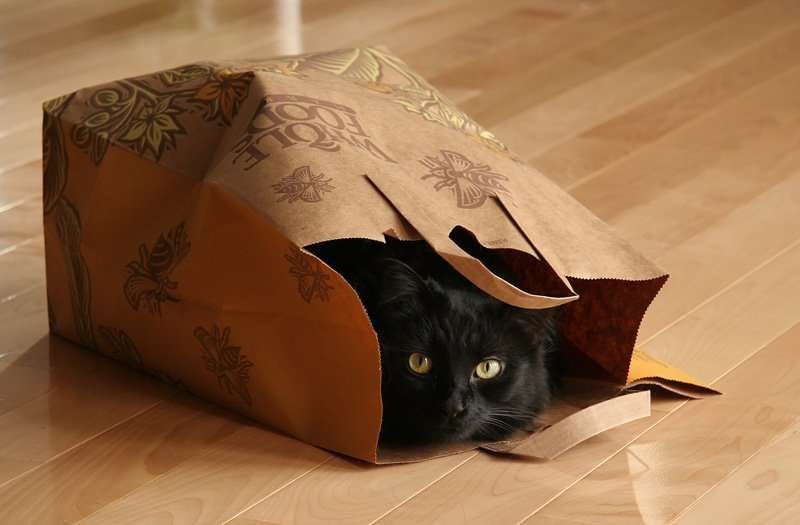 Like the cat out of the bag